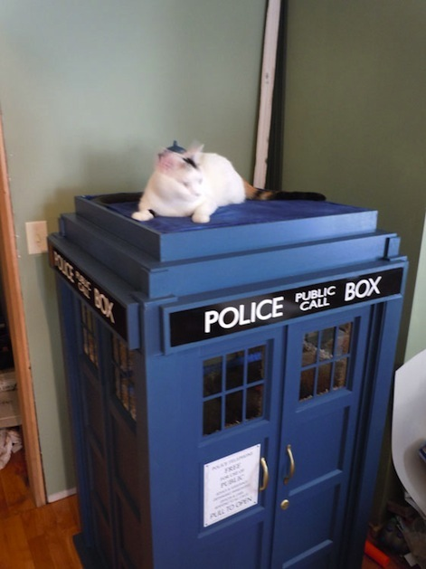 Tardis Cat Fort