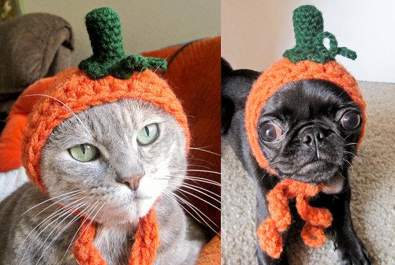 Halloween pet costume