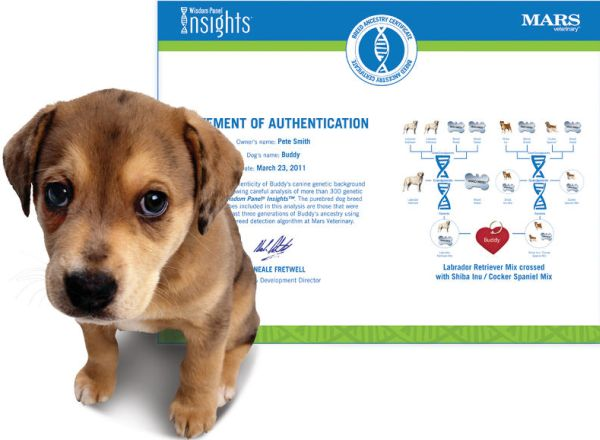 The Canine Genealogy Kit