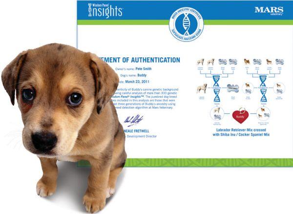 The Canine Genealogy Kit