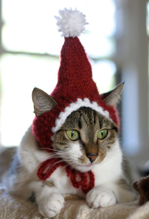 The Santa Cat Hat