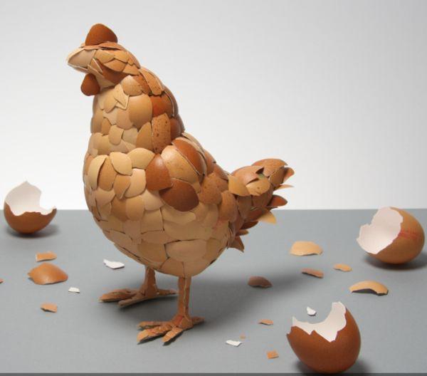 Chicken eggshells