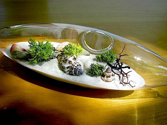 Modern Beach Vessel Lichen Moss Terrarium