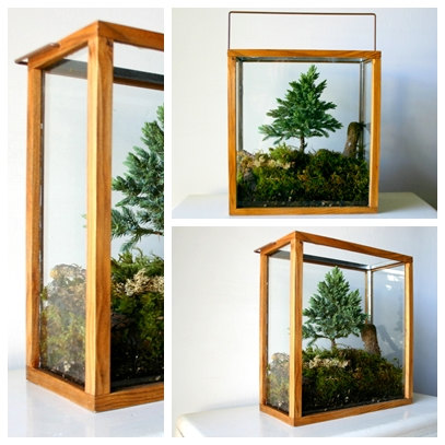 Table Top Forest Terrarium