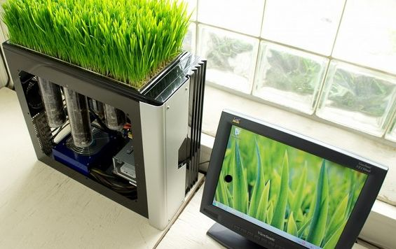 Grass growing working computer