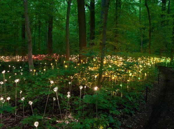 LED Flowers Bloom