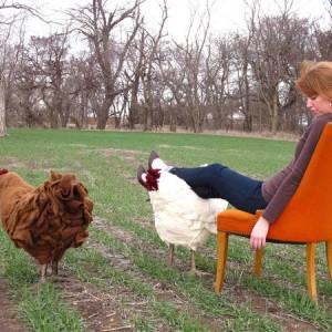 chicken footstool
