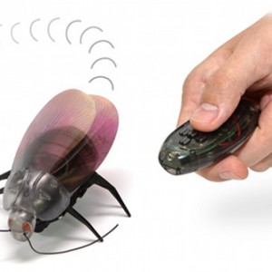 Gokiraji Remote Control Cockroach