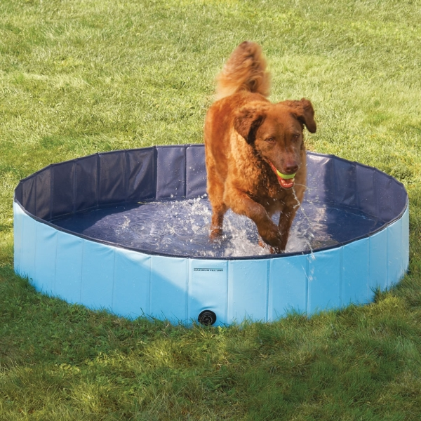 The Canine Splash Pool