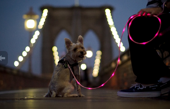 illuminated leashes