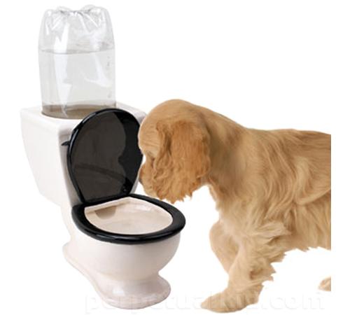 DOG TOILET WATER DISH