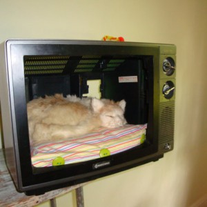 TV cat bed