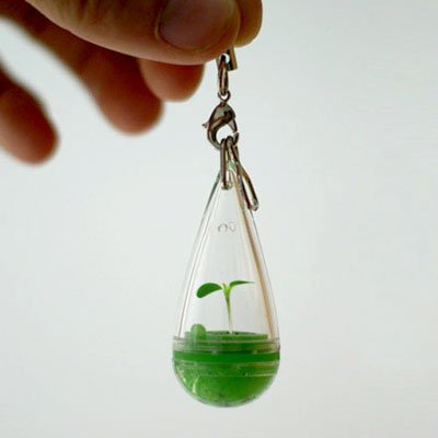 Growing Pet Plant Seed Bonsai Phone Strap Charm Dangle