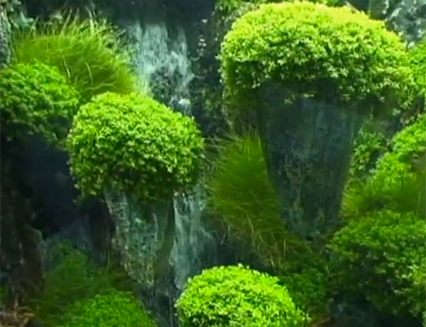 Avatar Aquarium