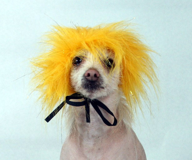 Dog Costume Wig Hat