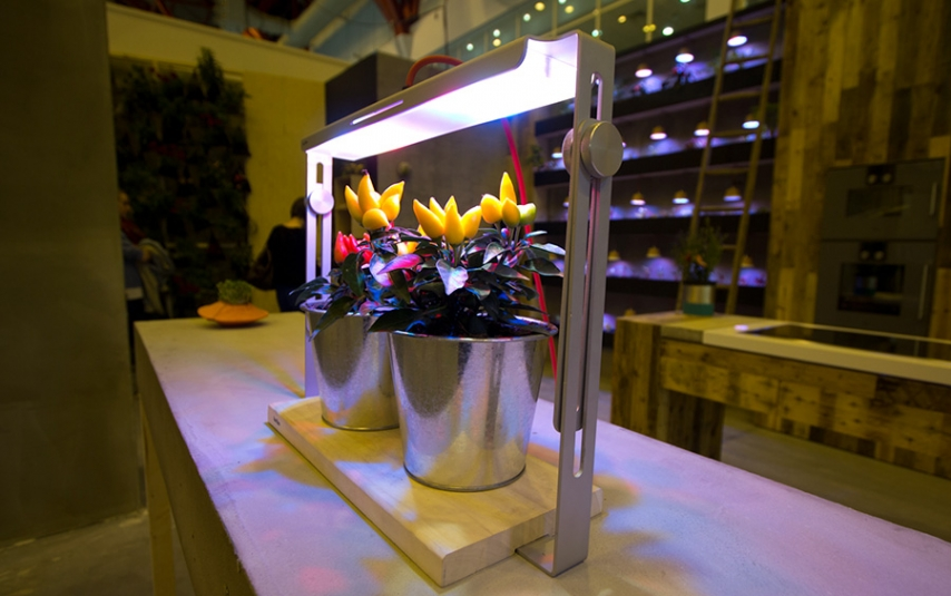 Microagriculture in your own home