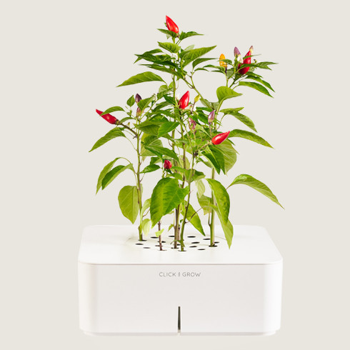 Grow Your Own Herbs At Home