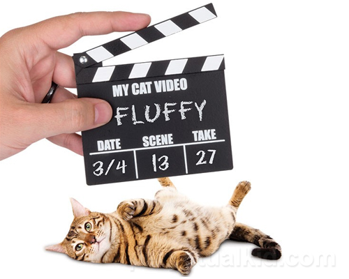 CAT VIDEO CLAPPERBOARD