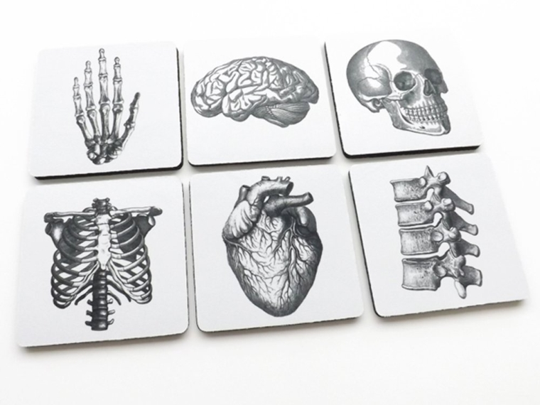 6 Anatomy Coasters