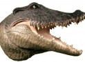 Alligator Crocodile Head w/ Teeth