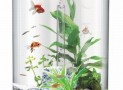 biUbe Pure Aquarium with Halogen Light