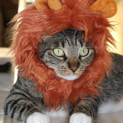 Jungle King Lion Hat for Cats and Dogs