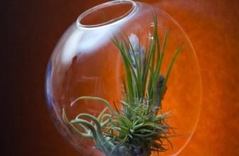 Wall Terrarium Globe