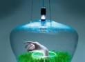 Greenhouse lamp