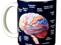 Brain Coffee Mug