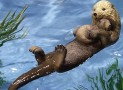 Floating Otter Pond Decoration