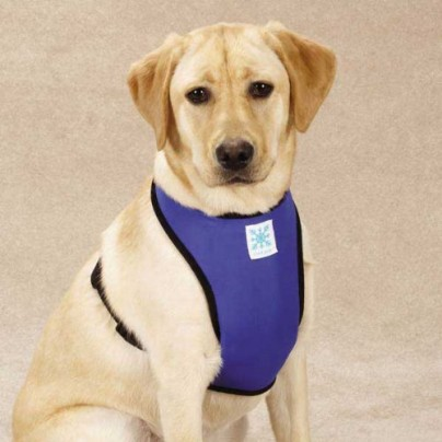 Cool Pup Dog Cooling Harness